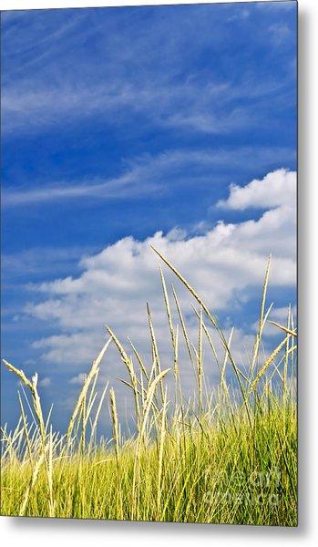 Tall Grass On Sand Dunes Metal Print