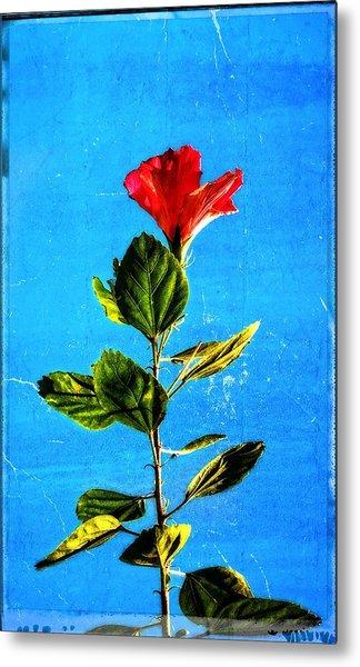 Tall Hibiscus - Flower Art By Sharon Cummings Metal Print