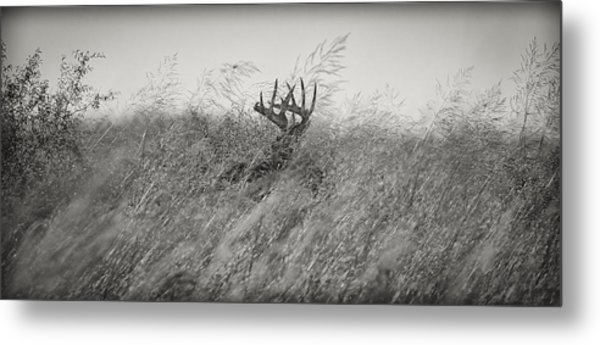 Tallgrass Whitetail Metal Print
