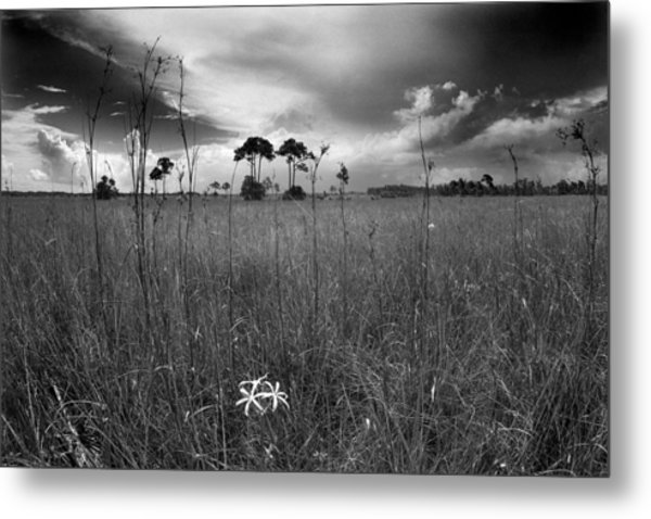 Tamiami Trail Metal Print