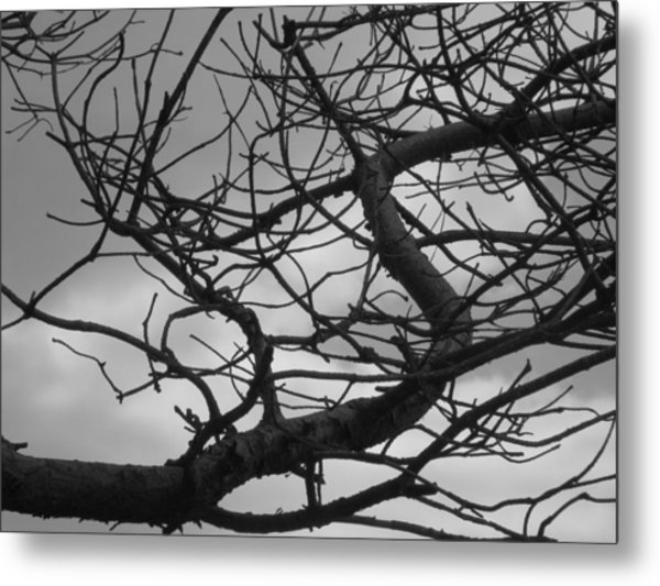 Tangled By The Wind Metal Print