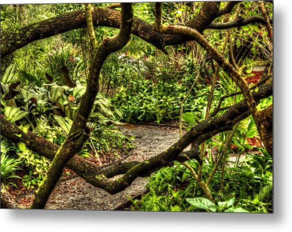 Tangled Path Metal Print