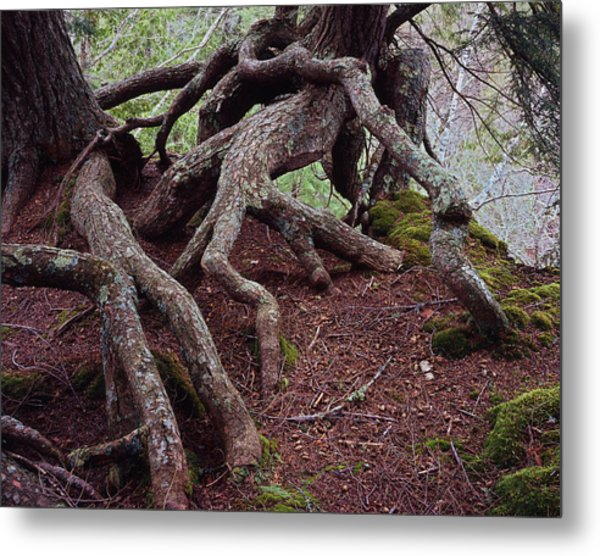 Tangled Roots Metal Print