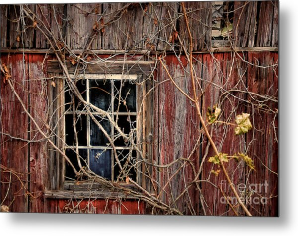 Metal Print featuring the photograph Tangled Up In Time by Lois Bryan