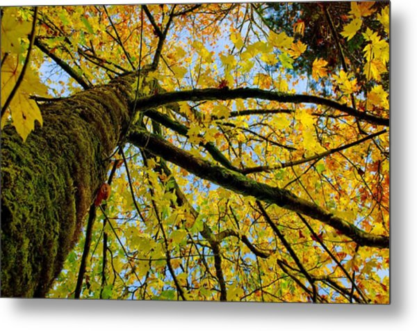 Tangled Up In Yellow Metal Print by Robert Holmberg