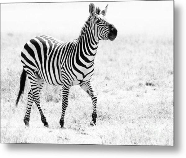 Tanzania Zebra Metal Print