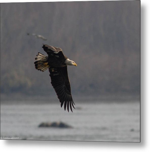 Target Spotted Metal Print by Glenn Lawrence