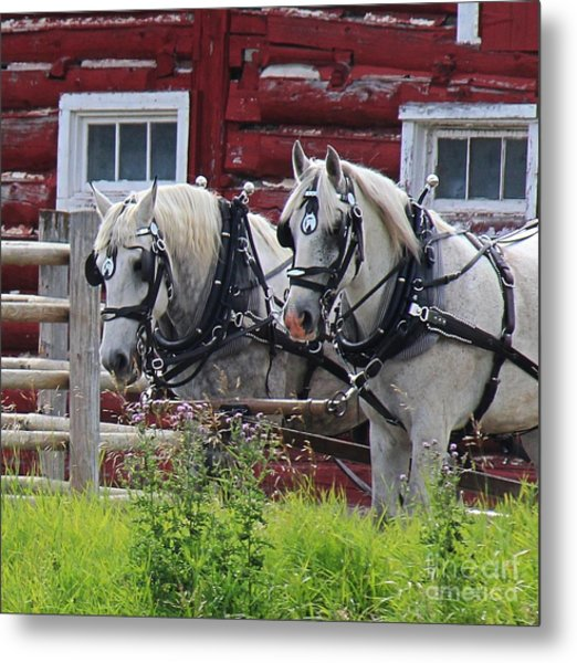 Team Of Greys Metal Print