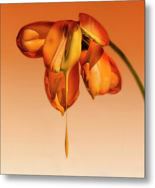 Tears Of A Flower Metal Print