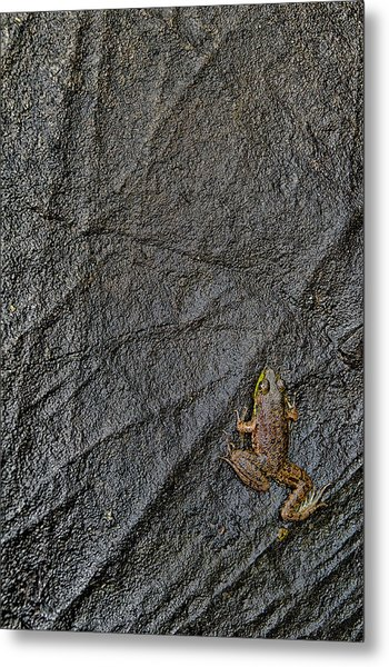 Metal Print featuring the photograph Tenacity  by Jeff Sinon
