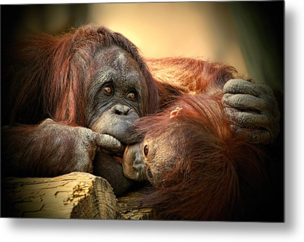 Metal Print featuring the photograph Tender Moment by Donna Proctor