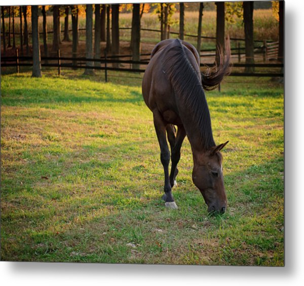 Metal Print featuring the photograph Tender Spring Grass by Kristi Swift