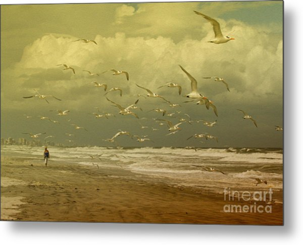 Terns In The Clouds Metal Print