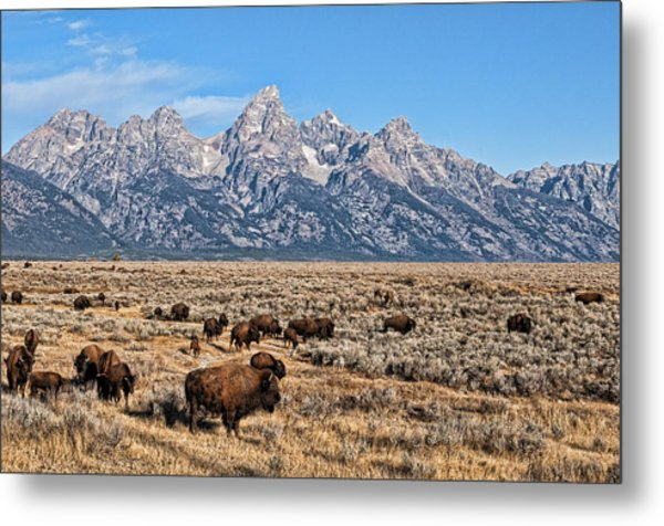 Metal Print featuring the photograph Teton Buffalo by David Armstrong