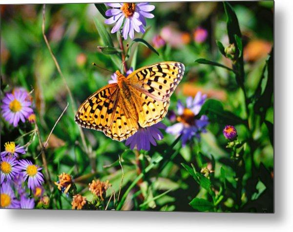 Teton Butterfly Metal Print