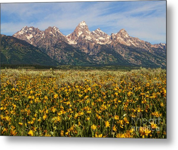 Tetons And Yellow Metal Print