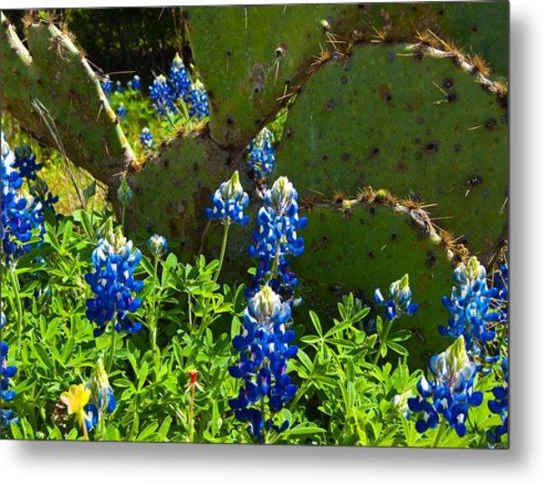 Texas Blue Bonnets Metal Print by Mark Weaver
