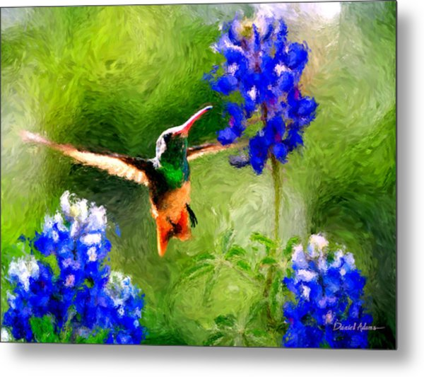 Da161 Texas Bluebonnet Hummingbird By Daniel Adams Metal Print