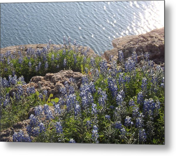 Texas Bluebonnets At Lake Travis Metal Print by Rebecca Cearley