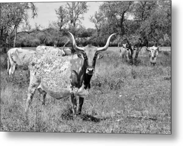 Texas Longhorns A Texas Icon Metal Print