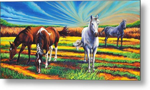 Texas Quarter Horses Metal Print