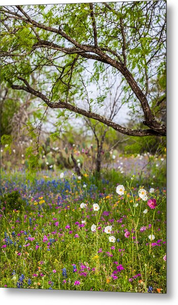 Texas Roadside Wildflowers 732 Metal Print