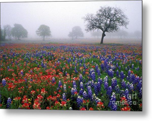 Texas Spring - Fs000559 Metal Print