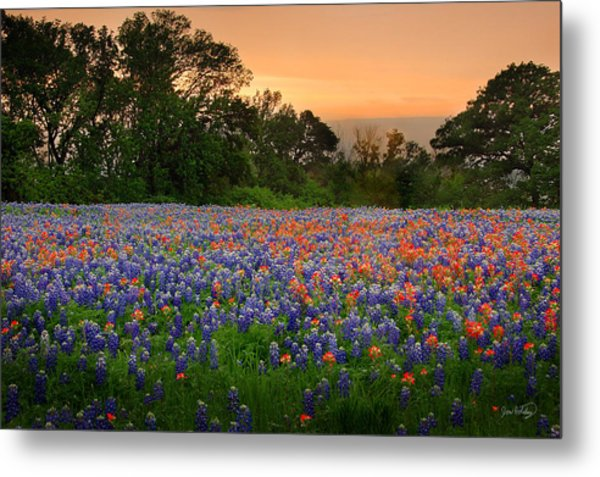 Texas Sunset - Bluebonnet Landscape Wildflowers Metal Print