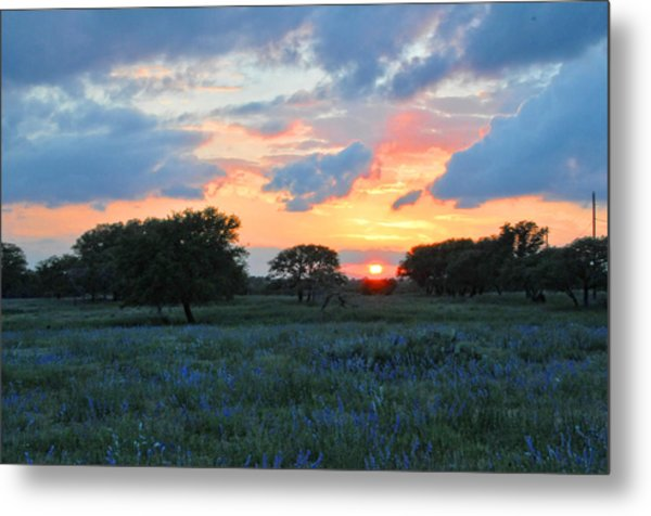 Texas Wildflower Sunset  Metal Print