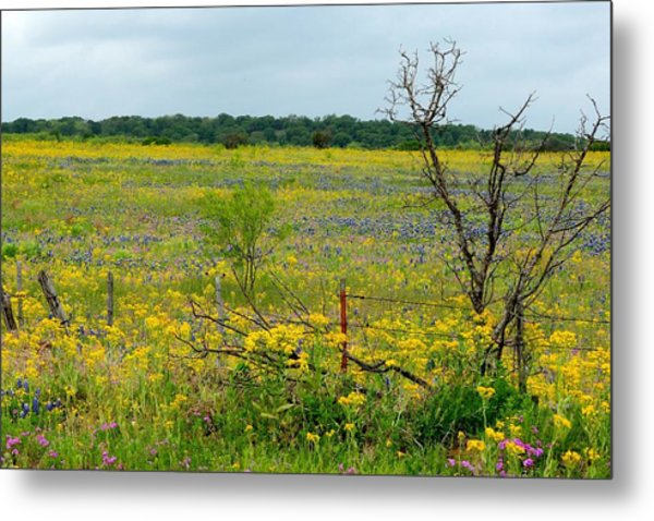 Texas Wildflowers And Mesquite Tree Metal Print