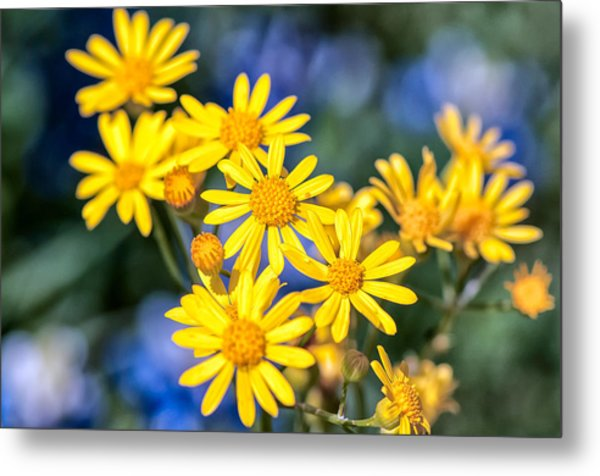 Texas Wildflowers 1 Metal Print