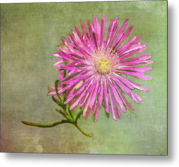Textured Daisy Metal Print