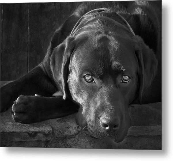 That Loving Gaze Metal Print by Larry Marshall