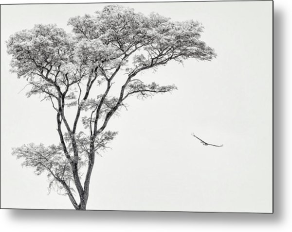 The African Eagle Metal Print
