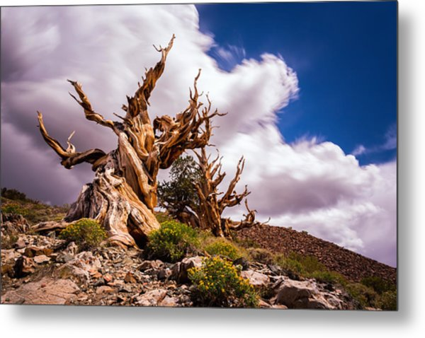 The Ancient Ones Metal Print