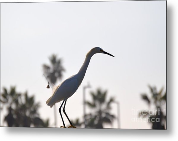 Metal Print featuring the photograph The Art Of Fishing by Laurie Lundquist