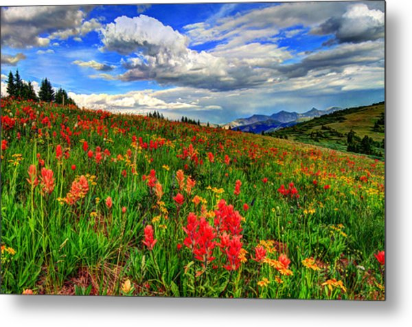 The Art Of Wildflowers Metal Print