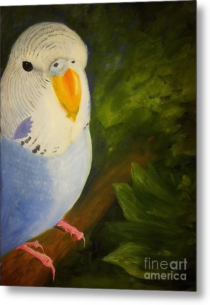 The Baby Parakeet - Budgie Metal Print
