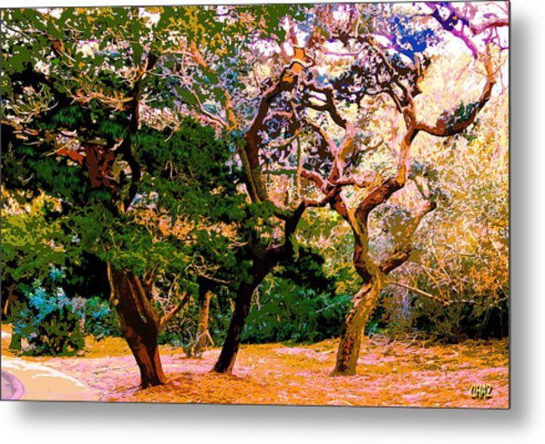 The Beautiful Trees Of Florida Metal Print