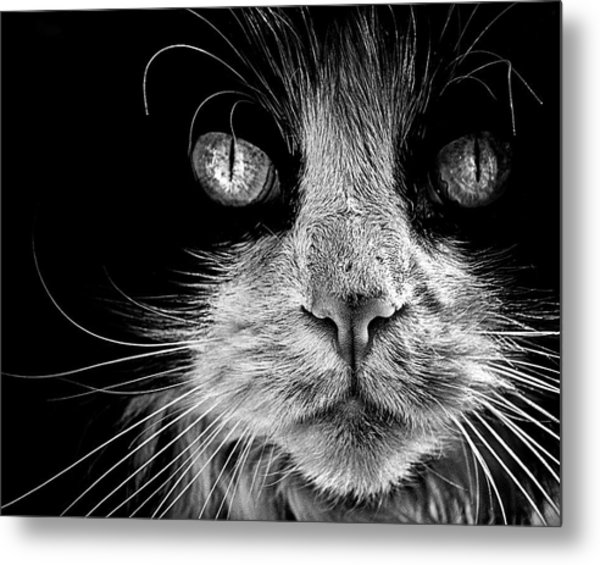 The Big Bad Boy Metal Print