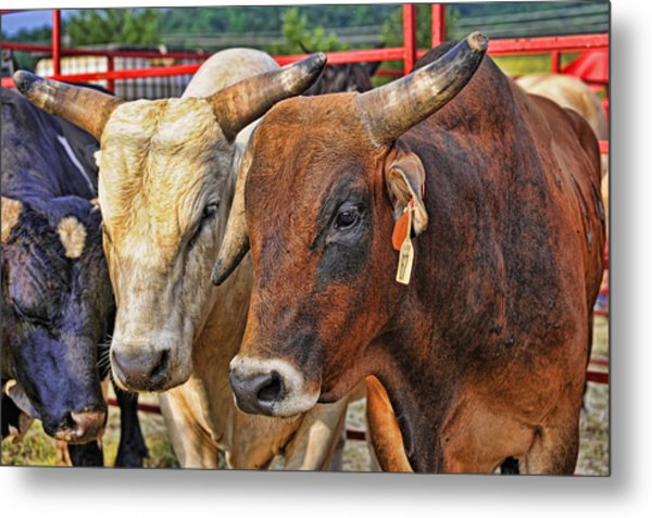 The Big Bull Strategy Meeting Metal Print