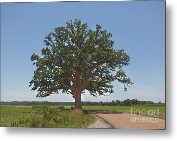 The Big Tree Metal Print