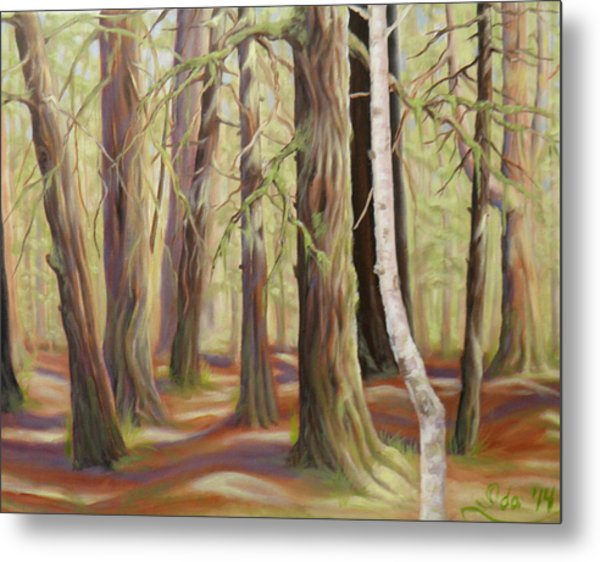 The Birch Tree Metal Print by Ida Eriksen