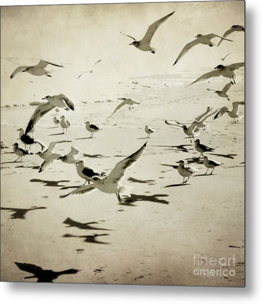 The Birds Metal Print by Sharon Kalstek-Coty