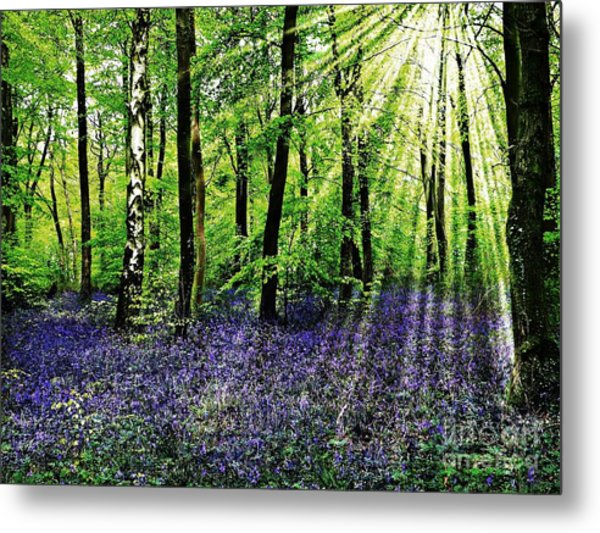 The Bluebell Woods Metal Print
