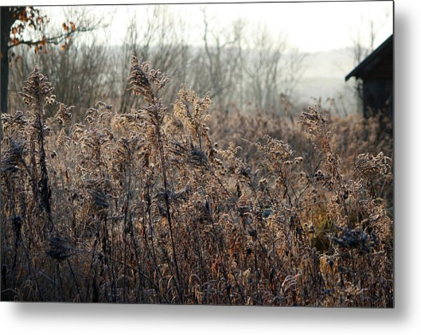 The Brown Side Of Winter Metal Print