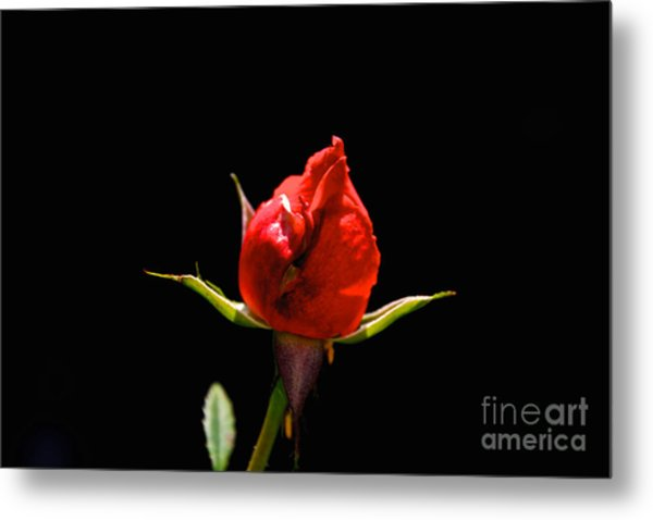 The Bud Metal Print