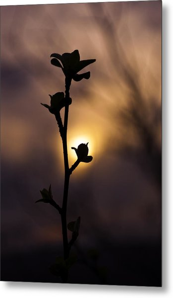 The Budding Branch Metal Print