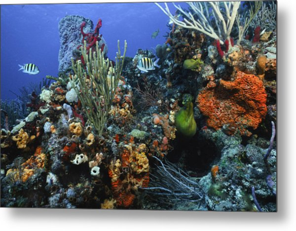 The Busy Reef Metal Print