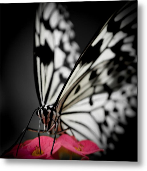 The Butterfly Emerges Metal Print